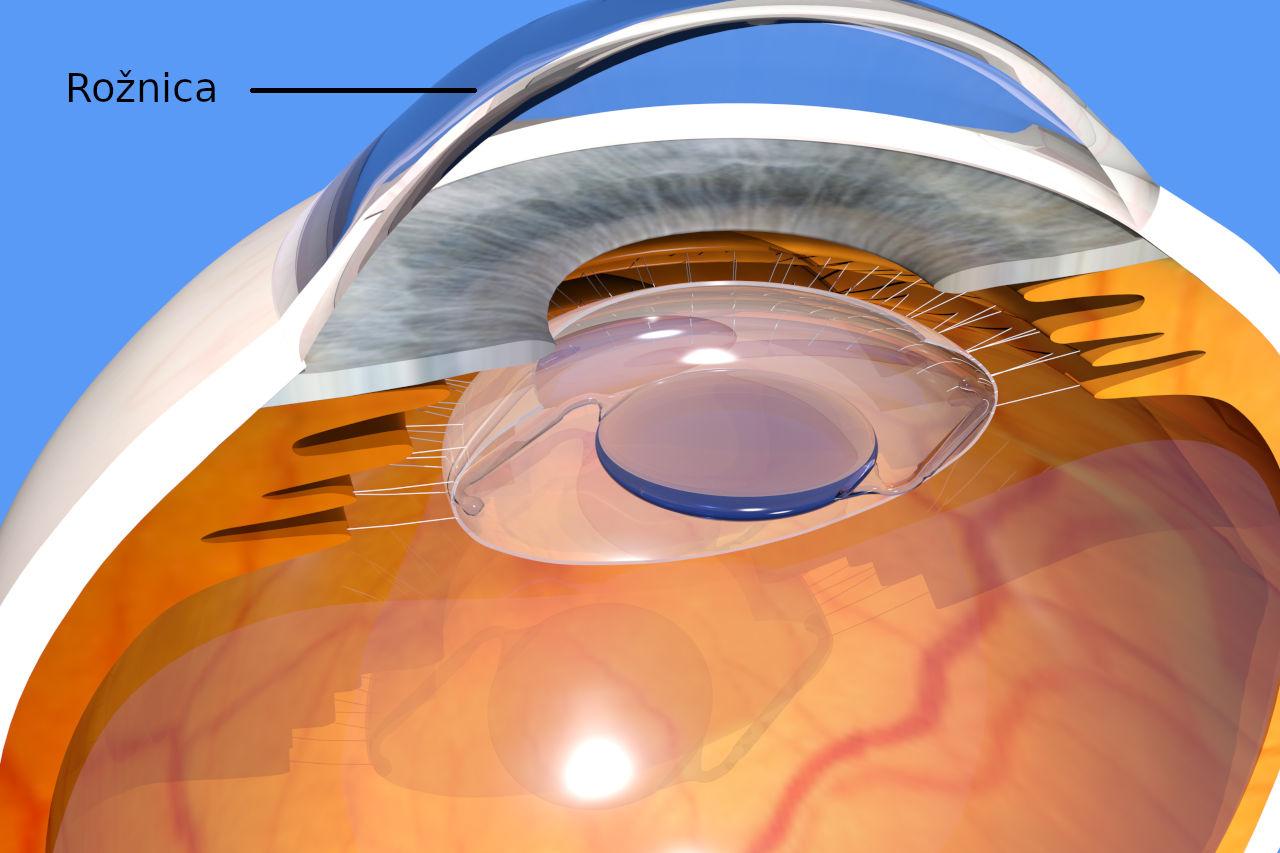 rožnica, rožnica oka, cornea