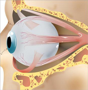 očni mišići