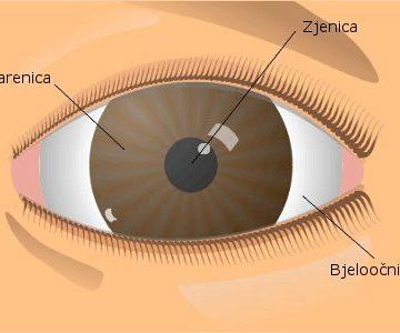 Prezentacija: Pogled u unutrašnjost oka 2. prikaz