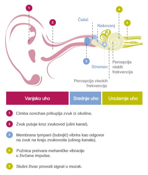 Funkcija sluha i gubitak sluha