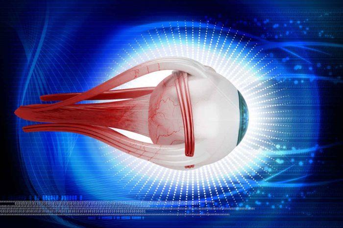 Vidni živac – anatomija, funkcija i oštećenja